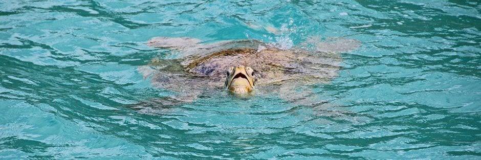14-Turtle