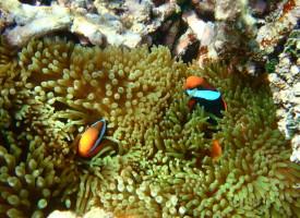 whitsunday-wildlife-queensland