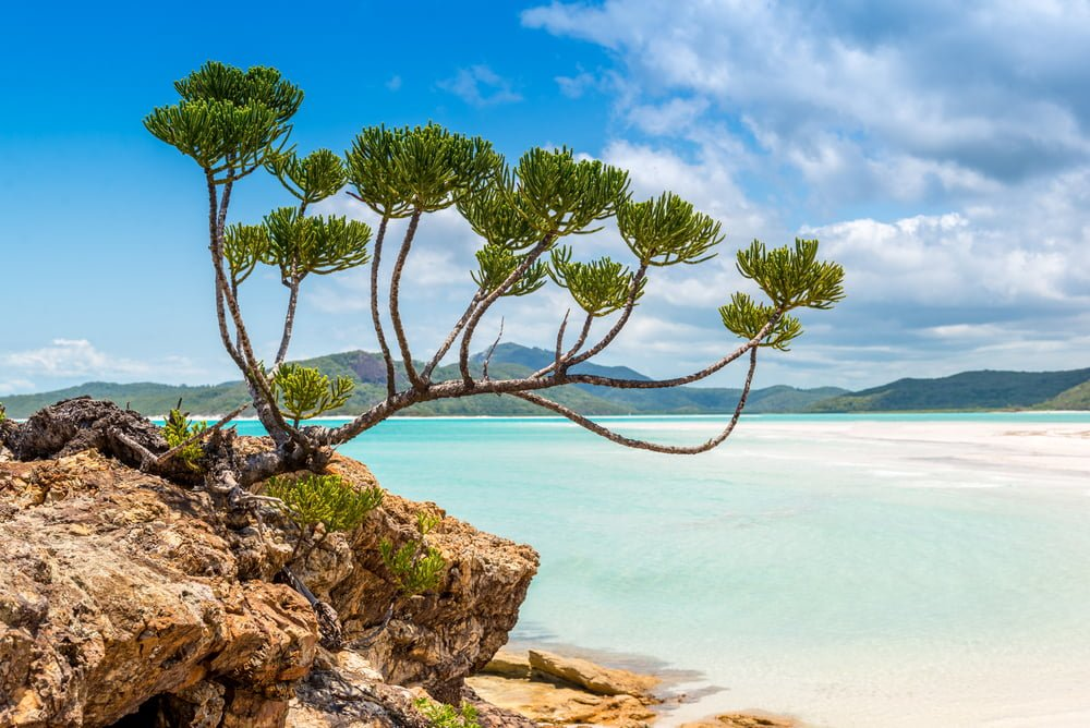5 Things Not to Miss on Your Whitsunday Yacht Charter