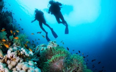 Scuba Diving in the Whitsundays – What to Know