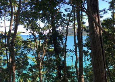 bushwalking-whitsundays-