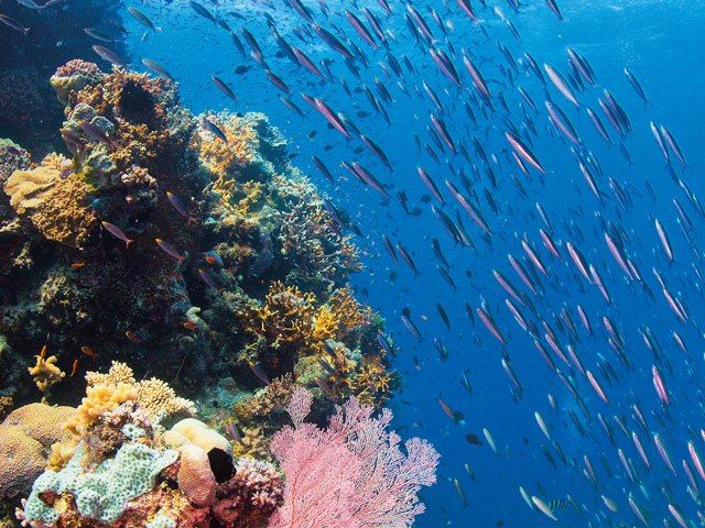 great-barrier-reef-under-water